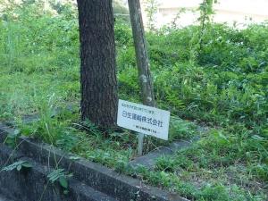 楷の木街道クリーン作戦を行いました。